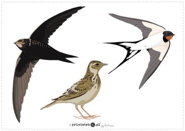 Ptaki Przylatujące Na Wiosnę Wycinanka Printotekapl