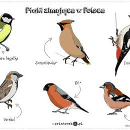 Ptaki Zimujące W Polsce Wycinanka Printotekapl