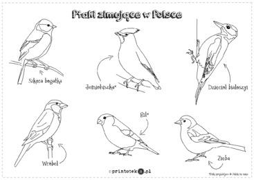 Ptaki zimujące w Polsce - kolorowanka - Printoteka.pl